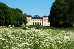 Sommarbild med vita blommor i förgrunden och slottet i oskärpa i bakgrunden