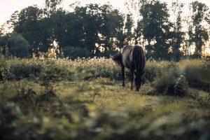 Häst i sommarhagen